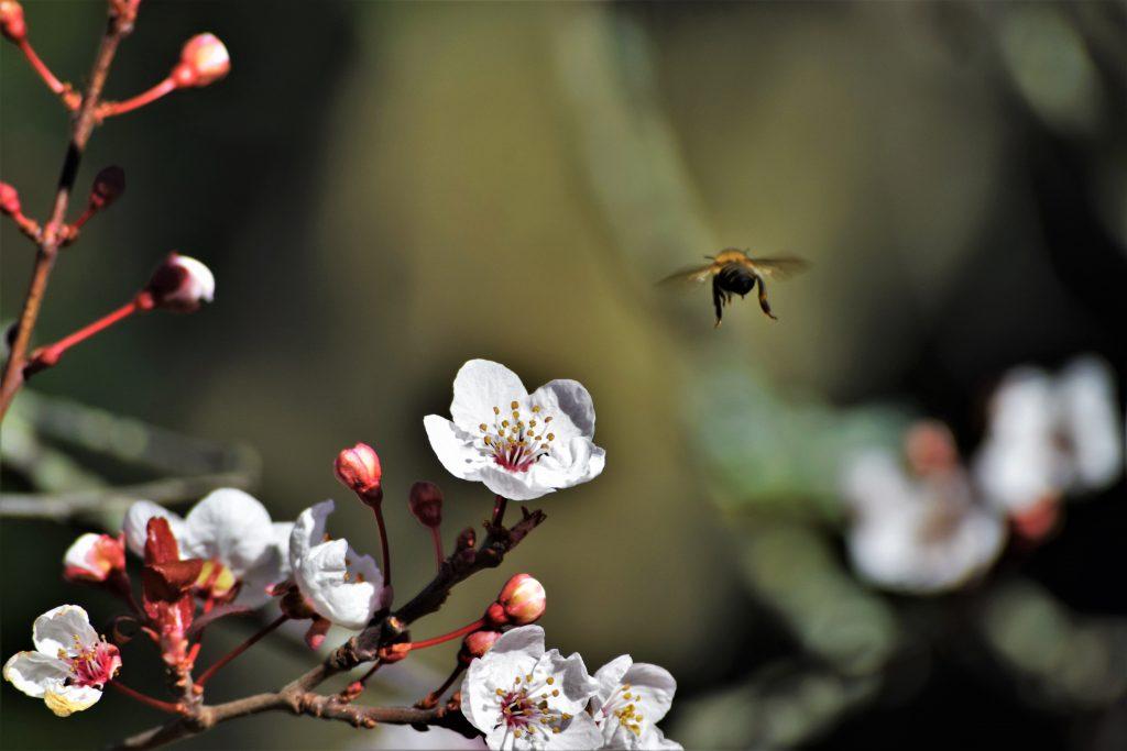 primavera y flores de bach