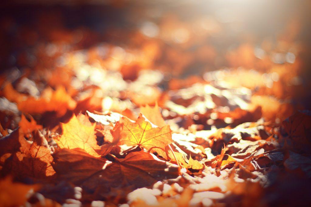cambio estacion otoño rutina